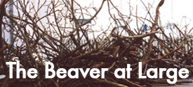 The Beaver at Large