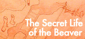 The Secret Life of the Beaver
